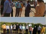 بازدید معاون تحقیقات ذرت و گیاهان علوفهای موسسه تحقیقات اصلاح و تهیه نهال و بذر کشور از مزرعه الگویی-ترویجی ذرت علوفهای در شهرستان بویین زهرا