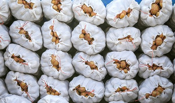 دولت از ظرفیت بورس کالا در ساماندهی بازار محصولات کشاورزی بهره ببرد