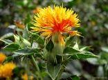 احداث باغ گیاه شناسی در لردگان