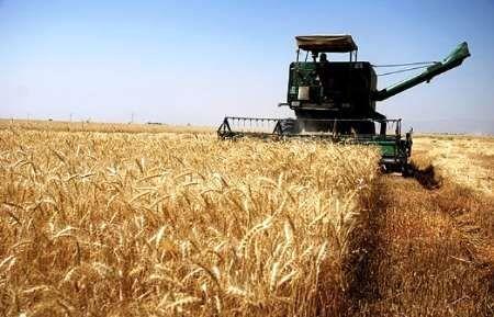 ریزش گندم در خراسان شمالی از میانگین کشوری پایینتر است