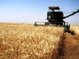 خریداری 20 هزار تن گندم در خراسان جنوبی