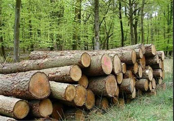 40 هزار هکتار زراعت چوب در کشور انجام می شود