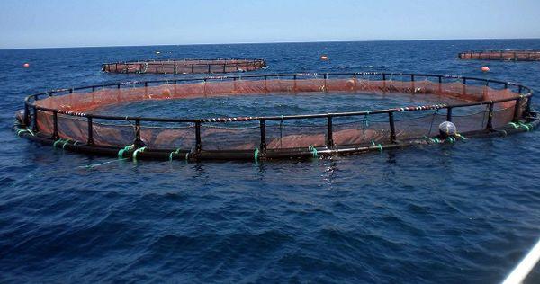 حمایت سیستم بانکی الزام توسعه پرورش ماهی در دریا