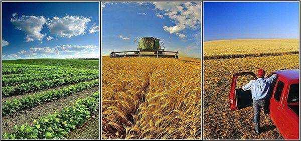 پژوهش پیرامون سیستم های کشت در مناطق خشک/ خشکسالی به قحطی در آینده کمک می کند