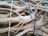 محموله قاچاق چوب تاغ در سمنان کشف شد