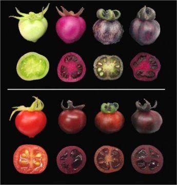 قرمز و بنفش های پرطمطراق/رنگ ها حشرات گرده افشان را جذب می کنند