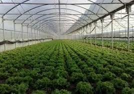 آغاز مطالعات احداث دو شهرک گلخانهای در شهرستان ری