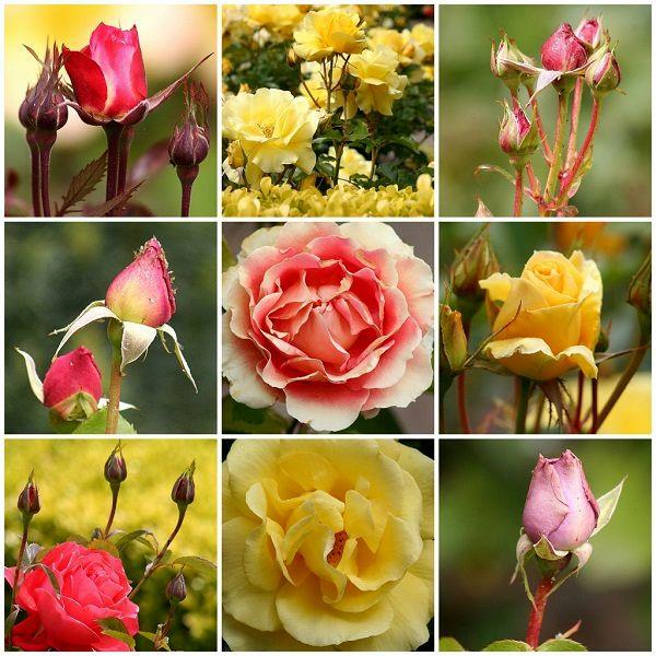 دومین نمایشگاه گل و گیاه پاکدشت برگزار میشود