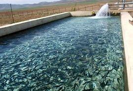 لزوم فرهنگسازی استفاده از آب چاههای کشاورزی جهت پرورش آبزیان