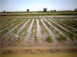 آخرین وضعیت پرداخت غرامت به بخش کشاورزی استان های سیل زده
