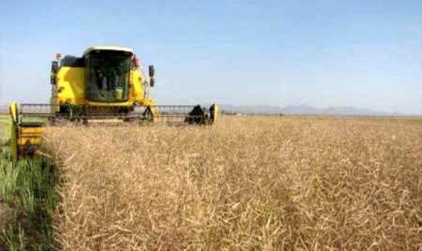برداشت ۱۷ هزار تن کلزا از مزارع گرمسیری ایلام