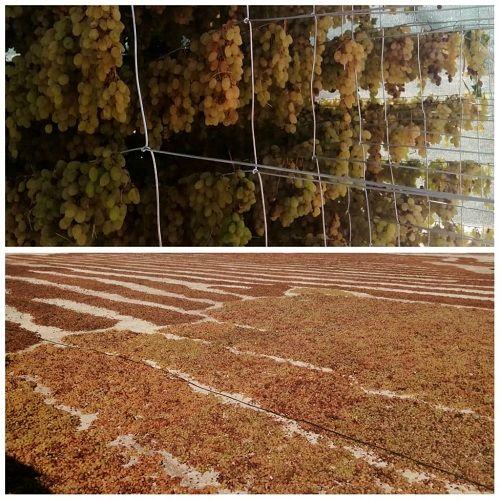 نخستین کارگاه فرآوری انگور در بیضا شروع به کار کرد