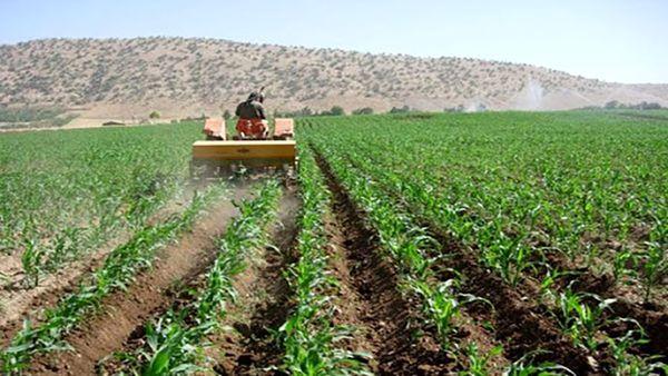 خراسان شمالی 452 هکتار اراضی کشاورزی قابل کشت دارد