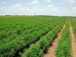 ضرورت تغییر نگرش کشاورزان به کشاورزی بازارمحور