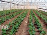تسهیل در صدور مجوز احداث گلخانه در استان تهران