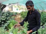 صادرات کشاورزی به کشورهای غربی مشکلتر میشود