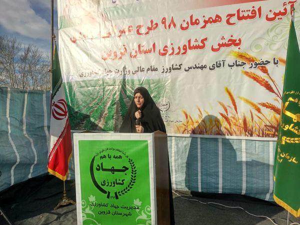 تولید 300 هزار تن گندم در استان قزوین