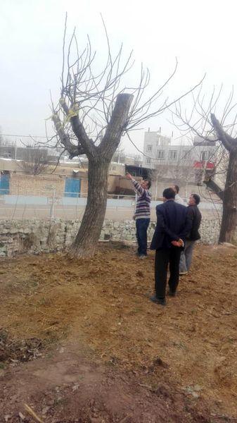 باغداران شهرستان قزوین با اصول نوین باغداری آشنا شدند