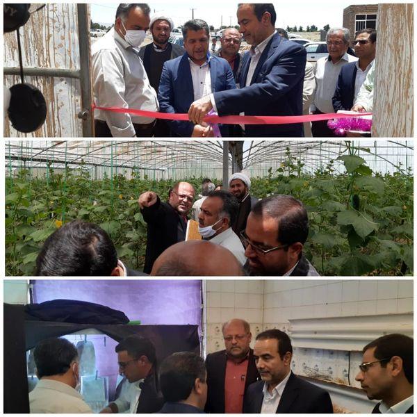 افتتاح یک واحد گلخانه به نمایندگی از ۵ گلخانه فردوس
