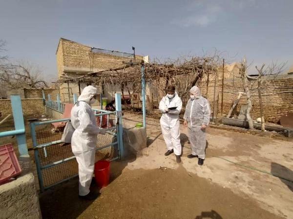 بازدید کارشناسان دامپزشکی از اجرای طرح واکسیناسیون طیور بومی شهرستان ورامین