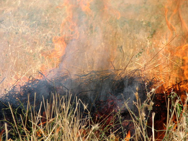 کشاورزان از آتش زدن بقایای خشک گیاهی در مزارع کشاورزی خودداری کنند