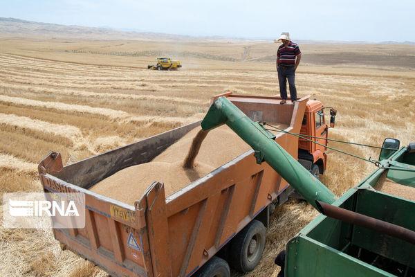۲۴ مرکز برای خرید تضمینی و توافقی گندم در خراسان شمالی آماده شده است