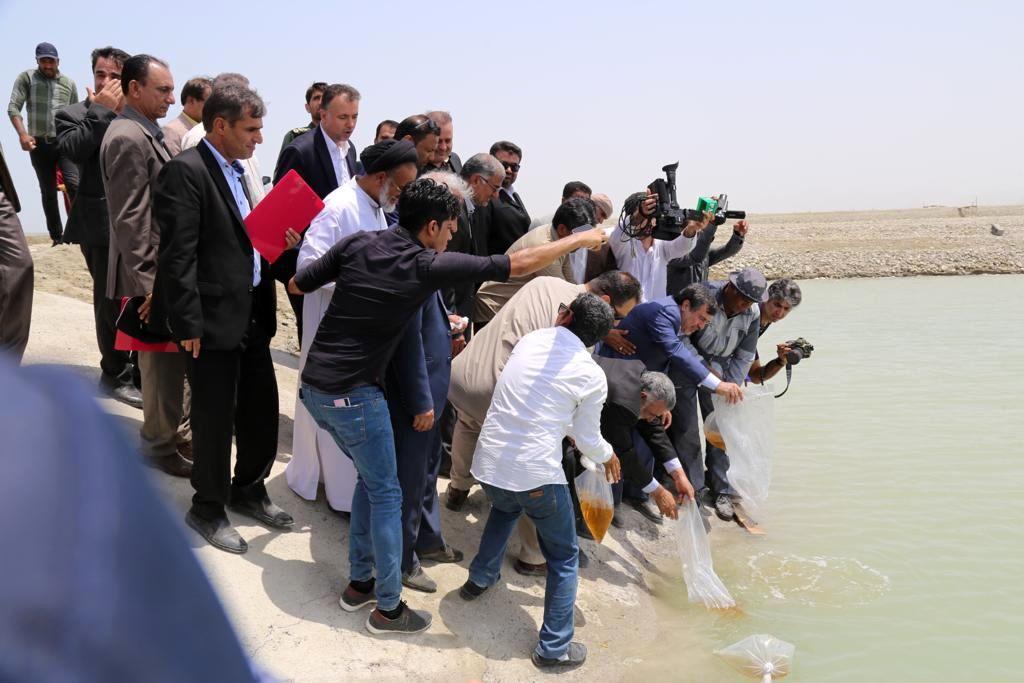 فتتاح مزرعه پرورش میگو توسط وزیر جهاد کشاورزی در ساحل سیریک استان هرمزگان