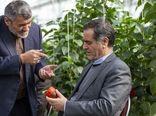 توسعه گلخانهها یکی از محورهای اقتصاد مقاومتی است