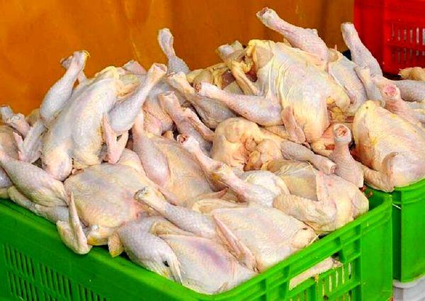 بیش از ۲۵۰ تن گوشت مرغ امروز روانه بازار آذربایجان غربی شد