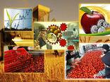 توسعه صنایع تبدیلی و غذایی بخش کشاورزی حلقه مؤثر در جهش تولید