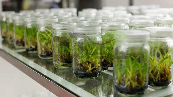 آینده کشاورزی و باغبانی با کشت بافت گره خورده است