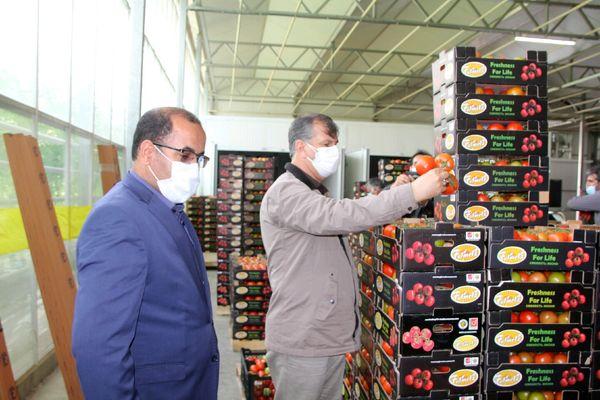 تولید 2.5 درصد از کل محصولات کشاورزی کشور در استان لرستان