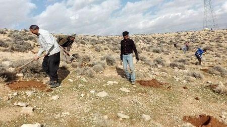 عملیات بذرکاری در عرصههای مرتعی کوار