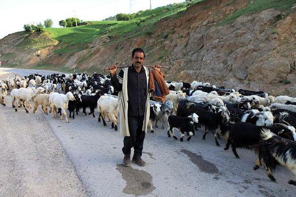 عشایر، فعالان عرصه تولید