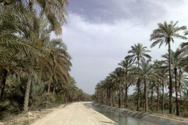 تقاضای کشاورزان استان بوشهر در تعدیل قیمت آببهای نخیلات بررسی میشود