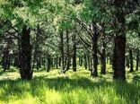 2300 هکتار از پارک های جنگلی شمال تهران به شهرداری ها احاله مدیریت می شود