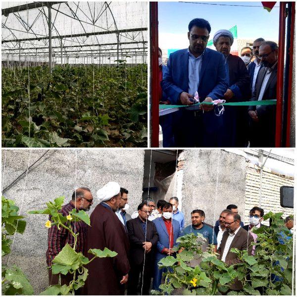 افتتاح یک واحد گلخانه سبزی صیفی شهرستان نهبندان