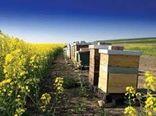 گراش؛ مقصد زنبورستان های مهاجر