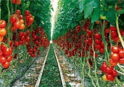 نهضت توسعه گلخانهها در کشور آغاز شده است