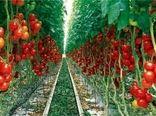 برنامه توسعه 4600 هکتاری تولید محصولات گلخانه ای در سال 1399