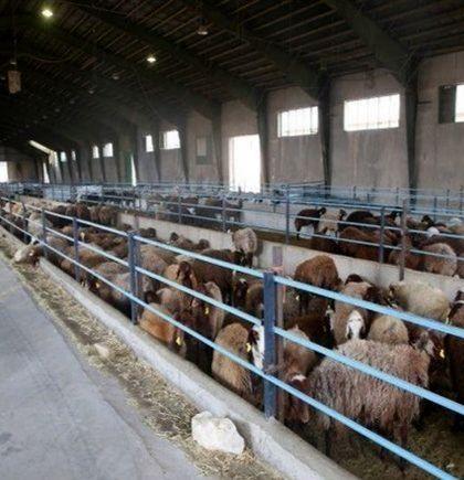 یک واحد دامپروری صنعتی در ارسنجان  افتتاح شد