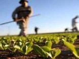پای ارز نیمایی به بازار کشاورزی باز شد
