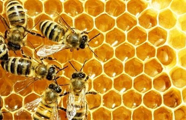 ابلاغ سند راهبردی توسعه زنبورداری کشور به دستگاههای اجرایی مرتبط