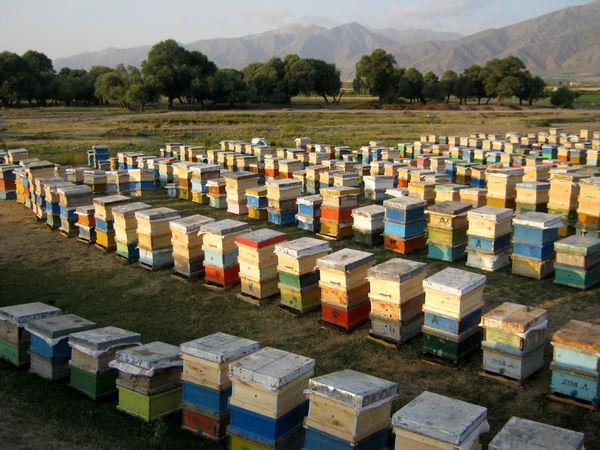 زنبورستانهای استان کرمانشاه سرشماری میشوند