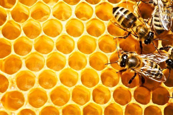 فعالیت 250 تعاونی زنبورداری در کشور