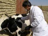 فاز سوم واکسیناسیون بیماری تب برفکی در شهرستان شهربابک تا اوایل فروردین 99 ادامه دارد