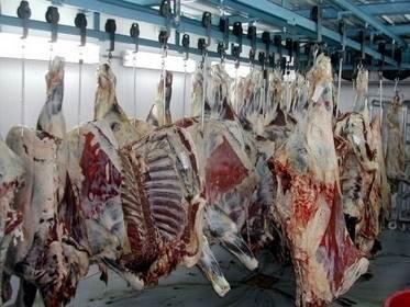 3800 میلیارد گوشت قرمز در بابل تولید شد