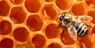 تولید بیش از21 تن انواع فرآوردههای زنبور عسل در استان زنجان