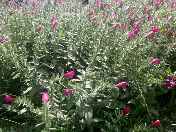 کشت وتوسعه گیاهان دارویی کم آبخواه و باغات در اراضی شیب دار مروست