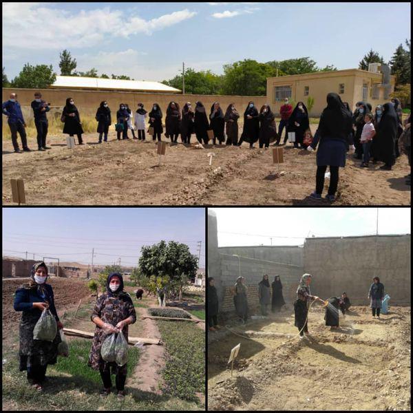 ۵۱۰ زن روستایی در استان قزوین کشت سبزیجات را آموزش میبینند